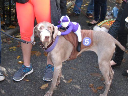Dog jockey costume DIY