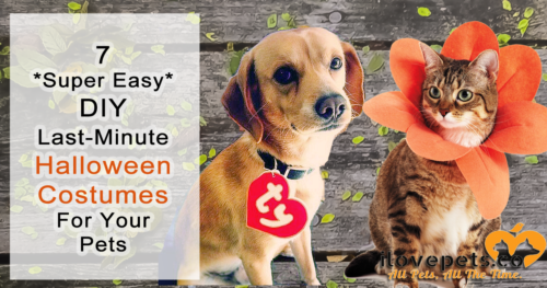 Need a quick, easy costume idea that won't annoy your pet? Any of these will do!