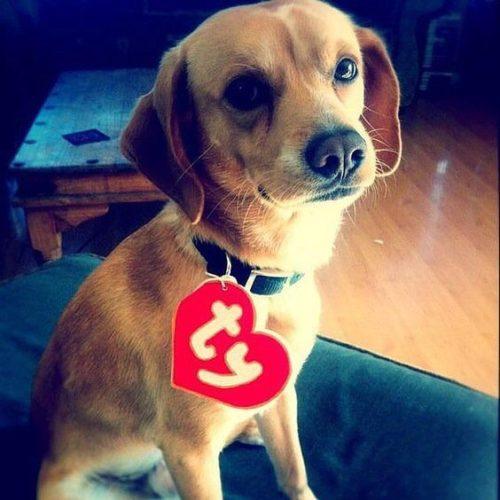 DIY TY Beanie Baby Costume & 7 Super Easy DIY Last-Minute Halloween Pet Costumes | I Love Pets