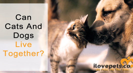 Can Cats And Dogs Live Together?
