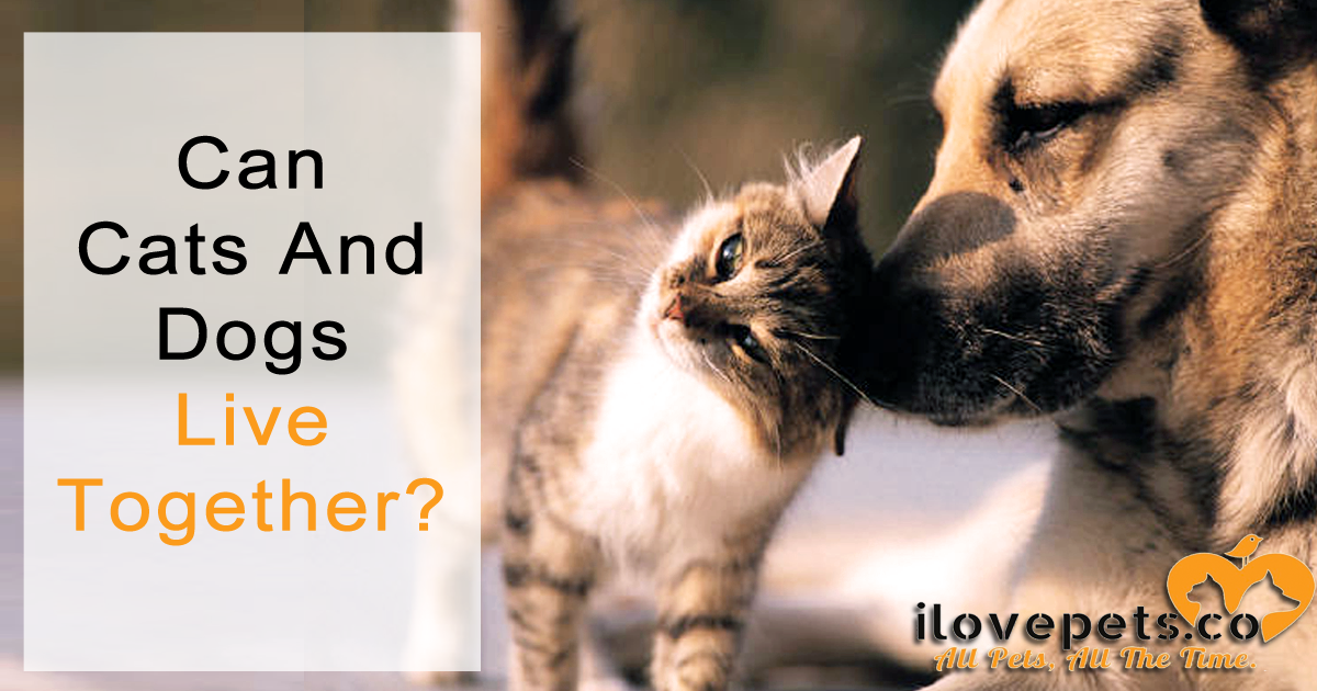 Can cats and dogs live together in peace? Despite their differences, they can become best friends.