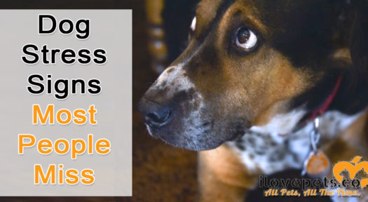 Dog Stress Signs Most People Miss