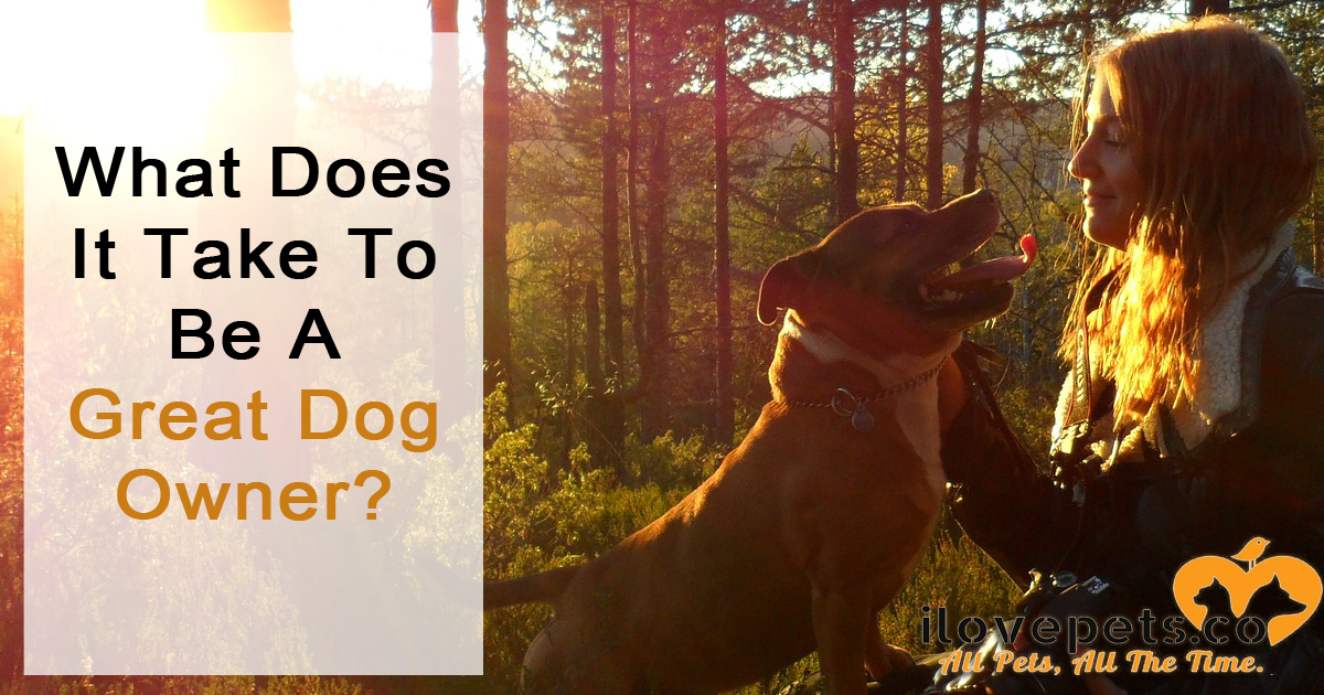 What does it take to be, not just a good owner, but a great dog owner?