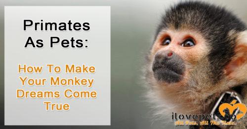 Primates as pets - childhood dream, terrible idea!