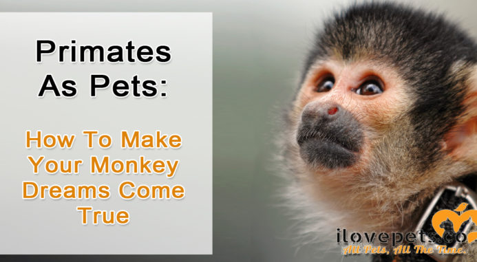 Primates As Pets: How To Make Your Monkey Dreams Come True