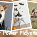 5 Sensational Power Player Pets In Social Media