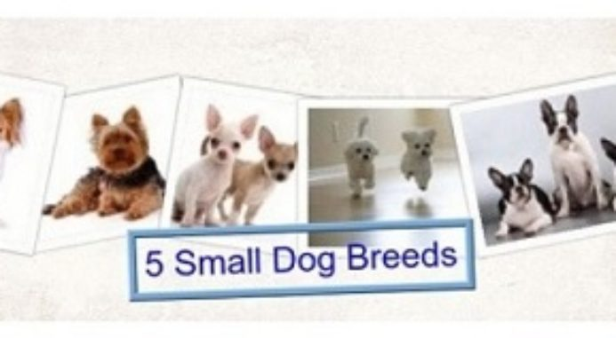 5 Small Dog Breeds That Always Stay Small No Matter Their Age