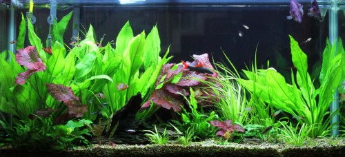 How many tetra fishes can i put in a 5 10 20 gallons or for How often should you clean a fish tank