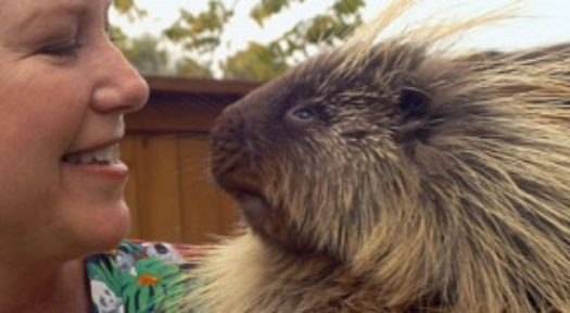 The Complete Resource To Keeping Porcupines As Pets
