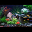 How To Change Your Aquarium Water? (The Complete Care Guide)