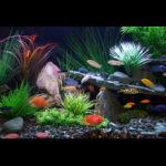 Aquarium|Tanks