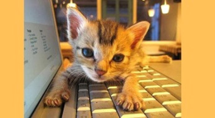 Cats And Keyboard: meow!