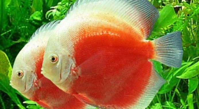 Common Eye Disorders In Fish: Types, Symptoms, Treatment & Prevention