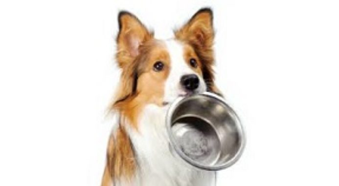 Dangers Of Too Much Protein In Dog Food