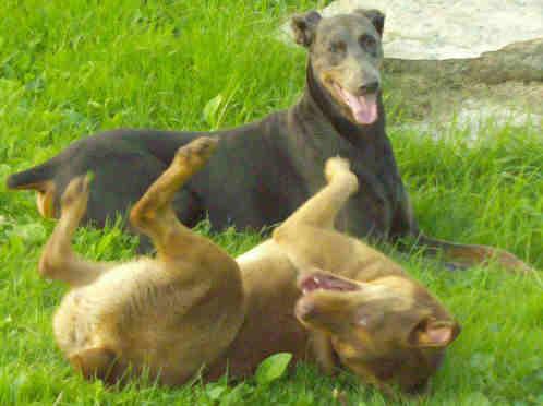 happy healthy dogs