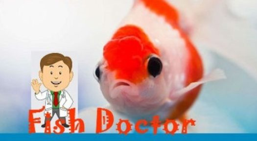 What You Need To Know About Veterinary Care For Fish?