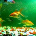5 Common Fish Diseases Every Fish Enthusiast Should Know