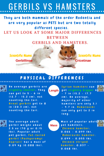 What Are The Differences Between A Gerbil And A Hamster? | I