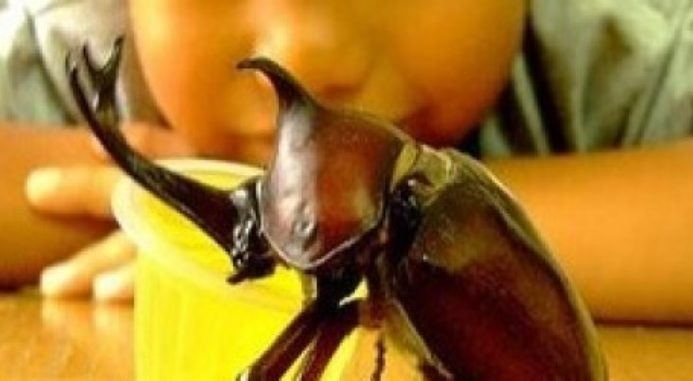 5 Awesome Insects You Can Keep As Pets