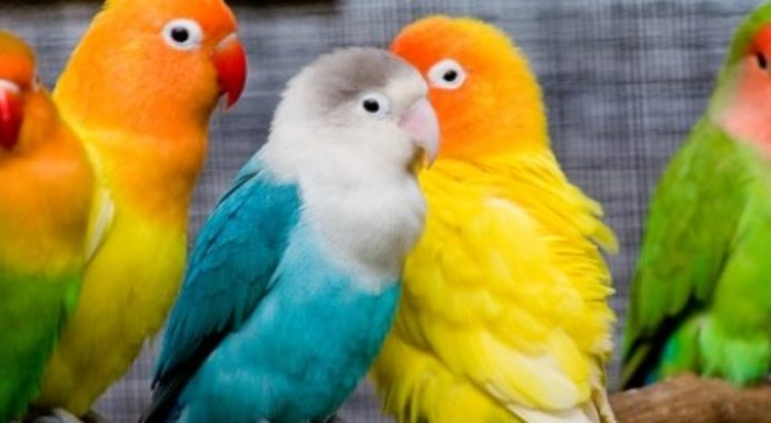 Molting In Pet Birds: Understanding How And Why Birds Molt