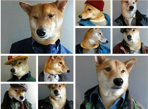 menswear-dog-photo