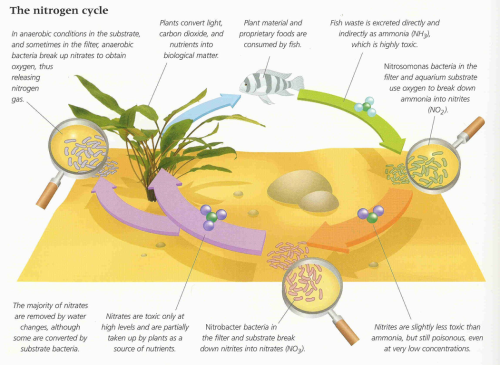 nitrogen-cycle-diagram