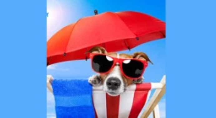 Pet Care Tips For Summer: Safety Tips For Pets