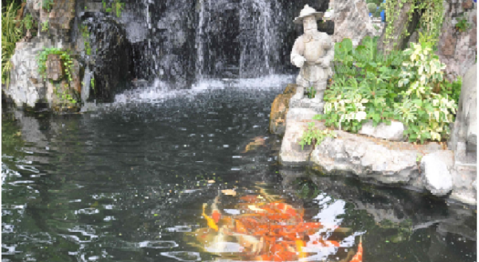 Beginner's Guide To Building And Maintaining Fish Ponds