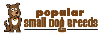 small-dog-breeds-pros-and-cons