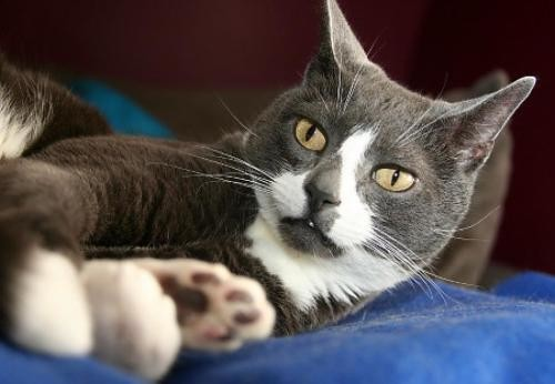 sockington-photo