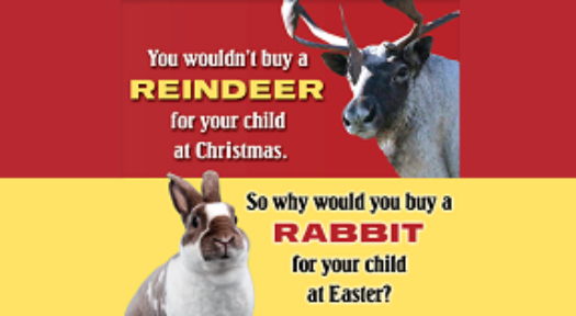 Why Rabbits Aren't My Ideal Pets?