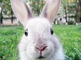 rabbit-image