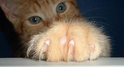 cat-claws-image1