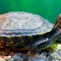 5 Non-Fish Aquarium Pets And How To Keep Them In An Aquarium