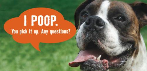 clean dog poop