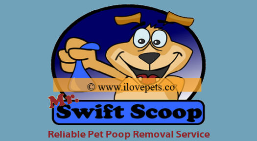 13 Awesome Reasons Why You Should Hire A Pooper Scooper Service
