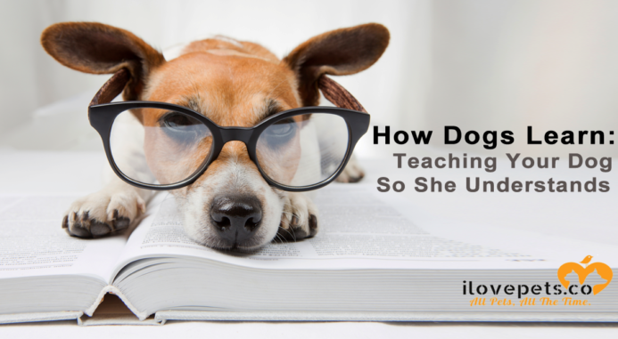 How Dogs Learn: Teaching Your Dog So She Understands