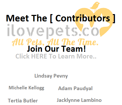 ilovepets.co contributors