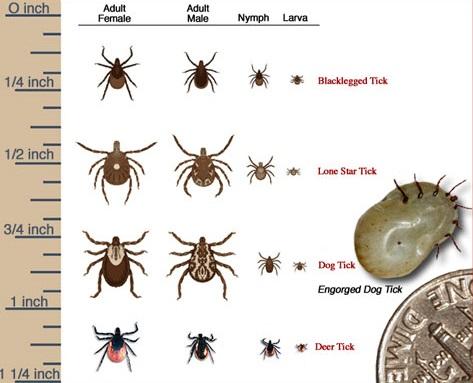 Identify popular ticks.
