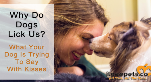 Why Do Dogs Lick Us?