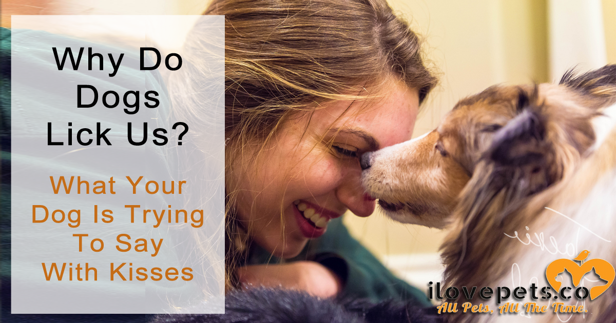 Why Do Dogs Lick Us? What Dogs Are Trying To Say With Kisses