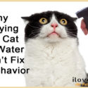 Why Spraying A Cat With Water Doesn't Work (Do THIS Instead!)