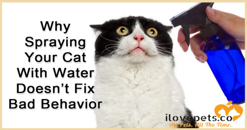 Using a spray bottle to train your cat won't solve bad behavior - but there's many great alternatives that won't ruin your relationship