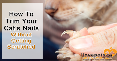 Trim your cat's nails without getting scratched using counter conditioning and desensitization