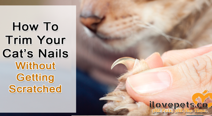 How To Trim Your Cat's Nails Without Getting Scratched