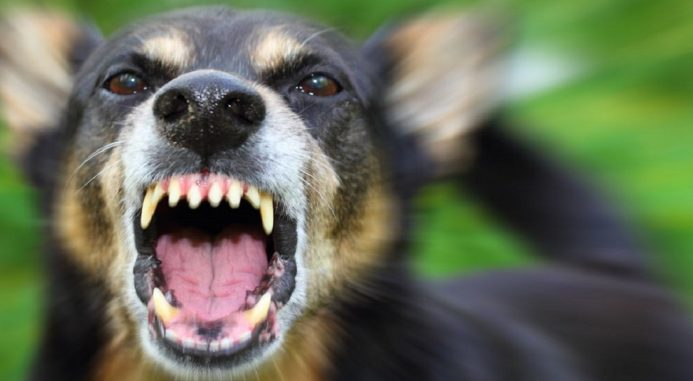 Why Do Dogs Bite And How To Prevent It?