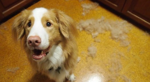 dogs from how step shedding to by video stop sheds prevent dog guide