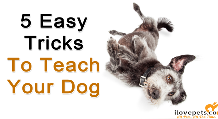 5 Easy Tricks To Teach Your Dog