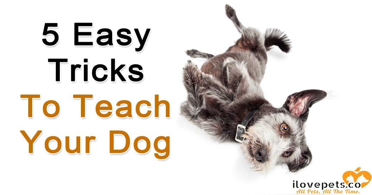 5 Easy Tricks to Teach Your Dog - in time for the holidays.