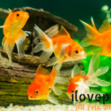 Anemia In Fish – What Is It All About?